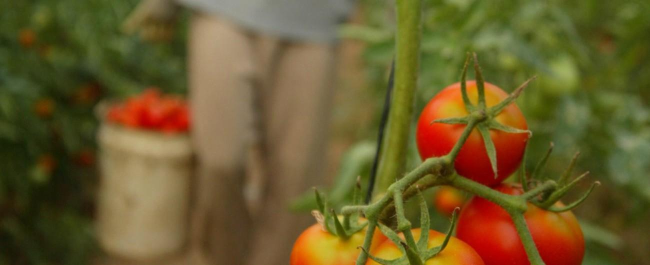 """""""Oro Rosso"""", l'inferno delle braccianti del Mediterraneo tra pomodori e violenze. """"Ricatti e paghe da fame"""""""