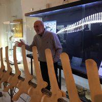 Il museo dei cetacei con l'appassionato direttore Giorgio Cataldini.