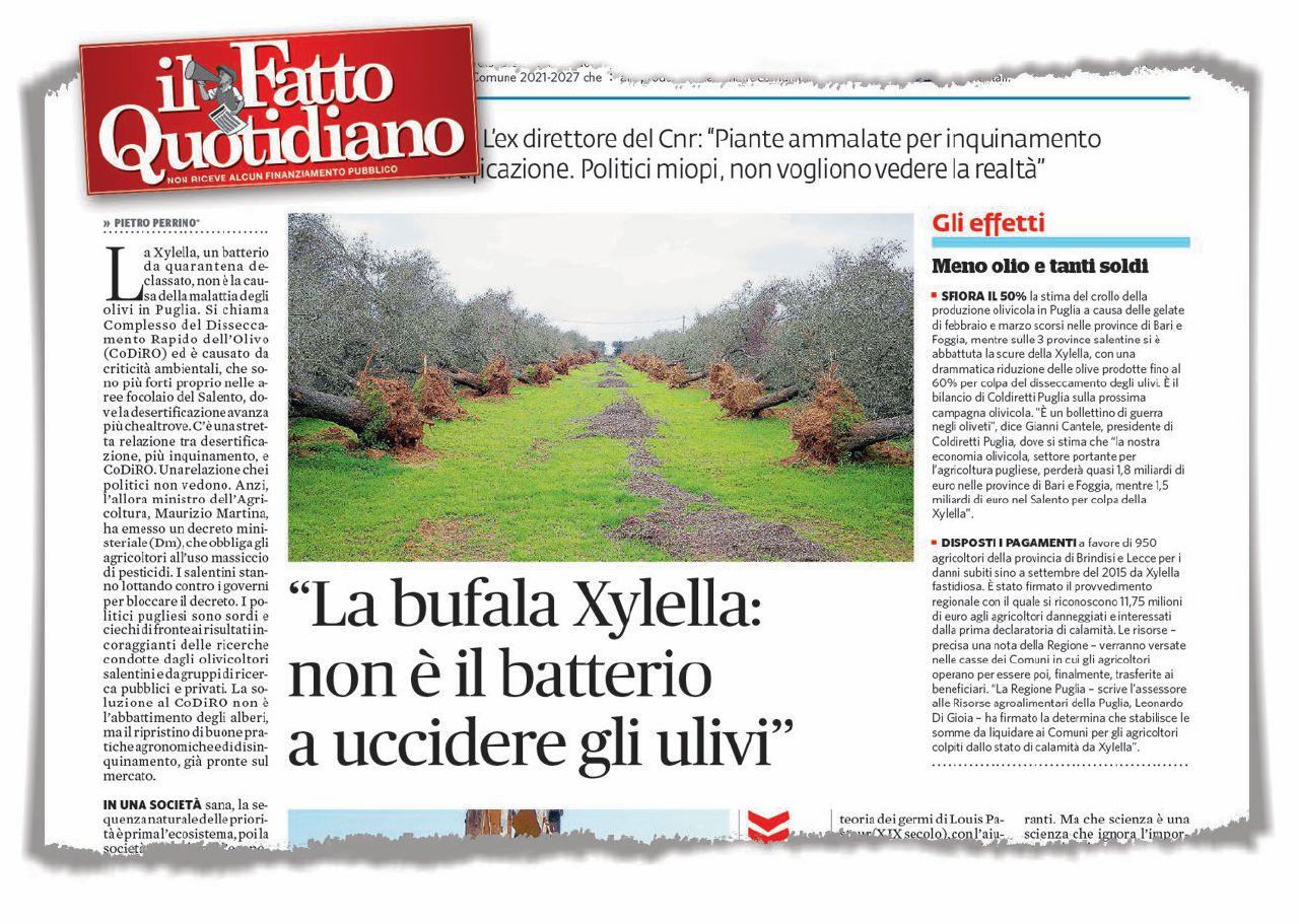 """""""È Xylella a uccidere gli ulivi"""". Ma non ci sono certezze"""