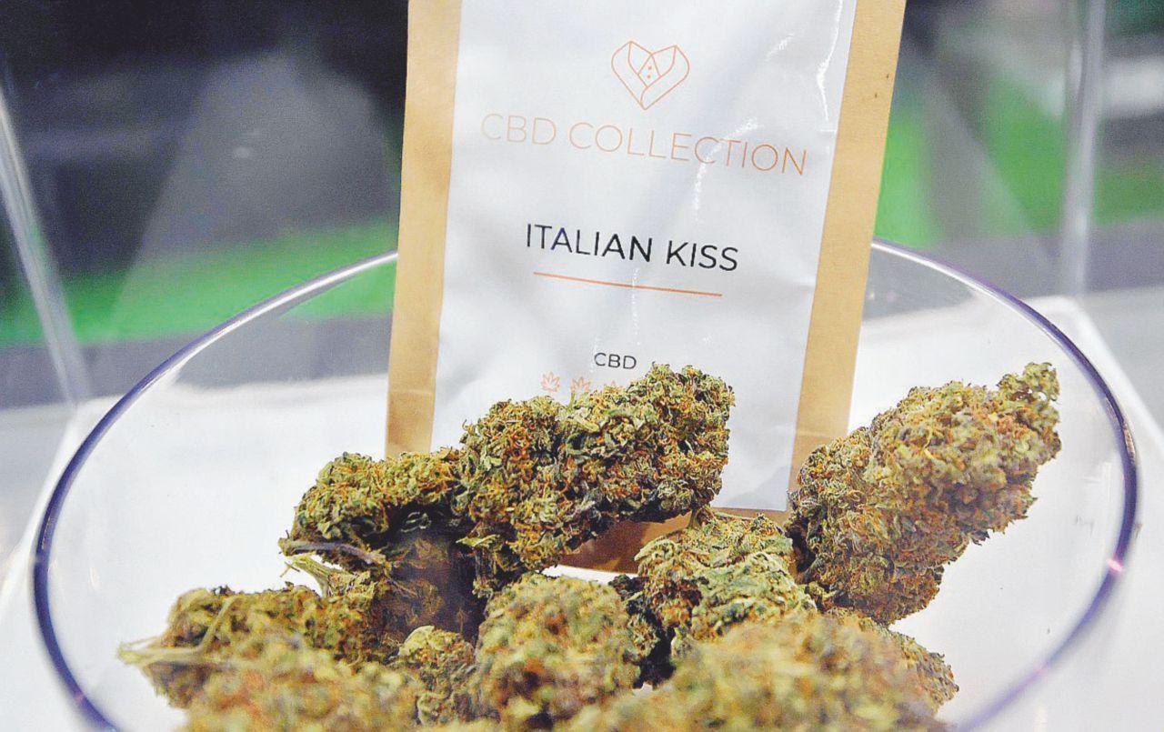 """""""La Cannabis leggera fa male"""". Governo al bivio: vietare o no?"""