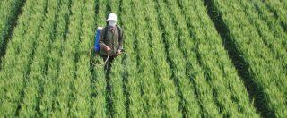 I pesticidi causano obesità e diabete. Cos'è l'effetto 'cocktail' e perché è pericoloso