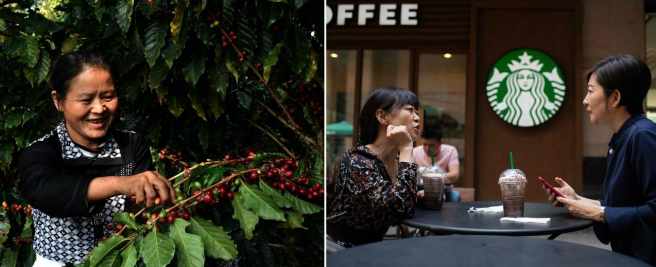 Cina, caffè sta prendendo il posto del tè: piantagioni raddoppiate e 600 Starbucks in un anno. E' il simbolo dei borghesi