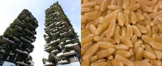 Il Bosco verticale e la pasta di Kamut hanno qualcosa in comune: sono per pochi