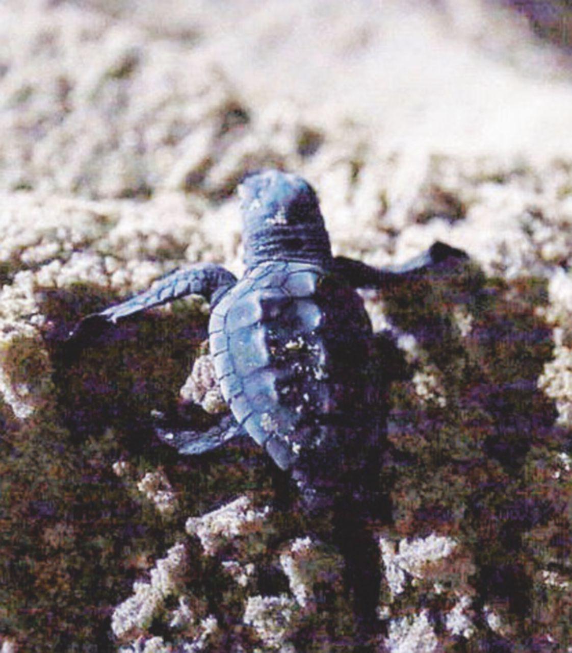 Non è un'isola per tartarughe. A rischio il centro di Lampedusa