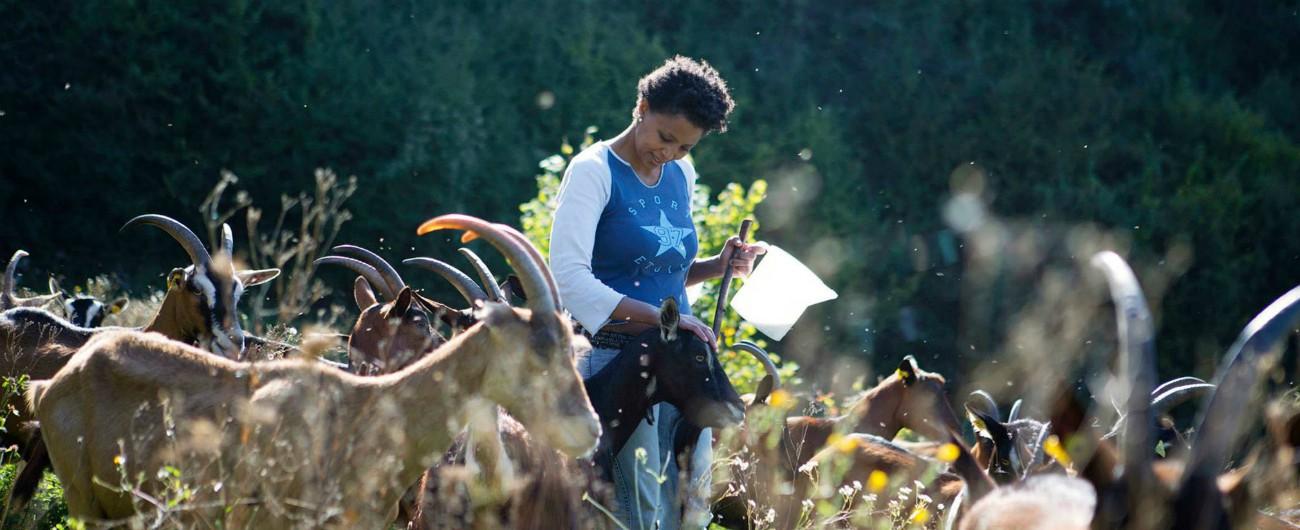 """Trentino, allevatrice etiope aggredita e minacciata: """"Brutta negra, ti uccido"""""""