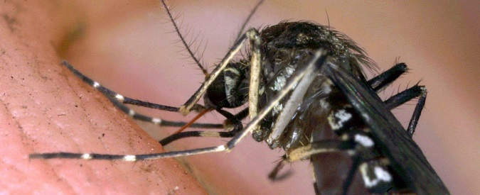 West Nile, cos'è e come si previene il virus trasmesso dalle zanzare
