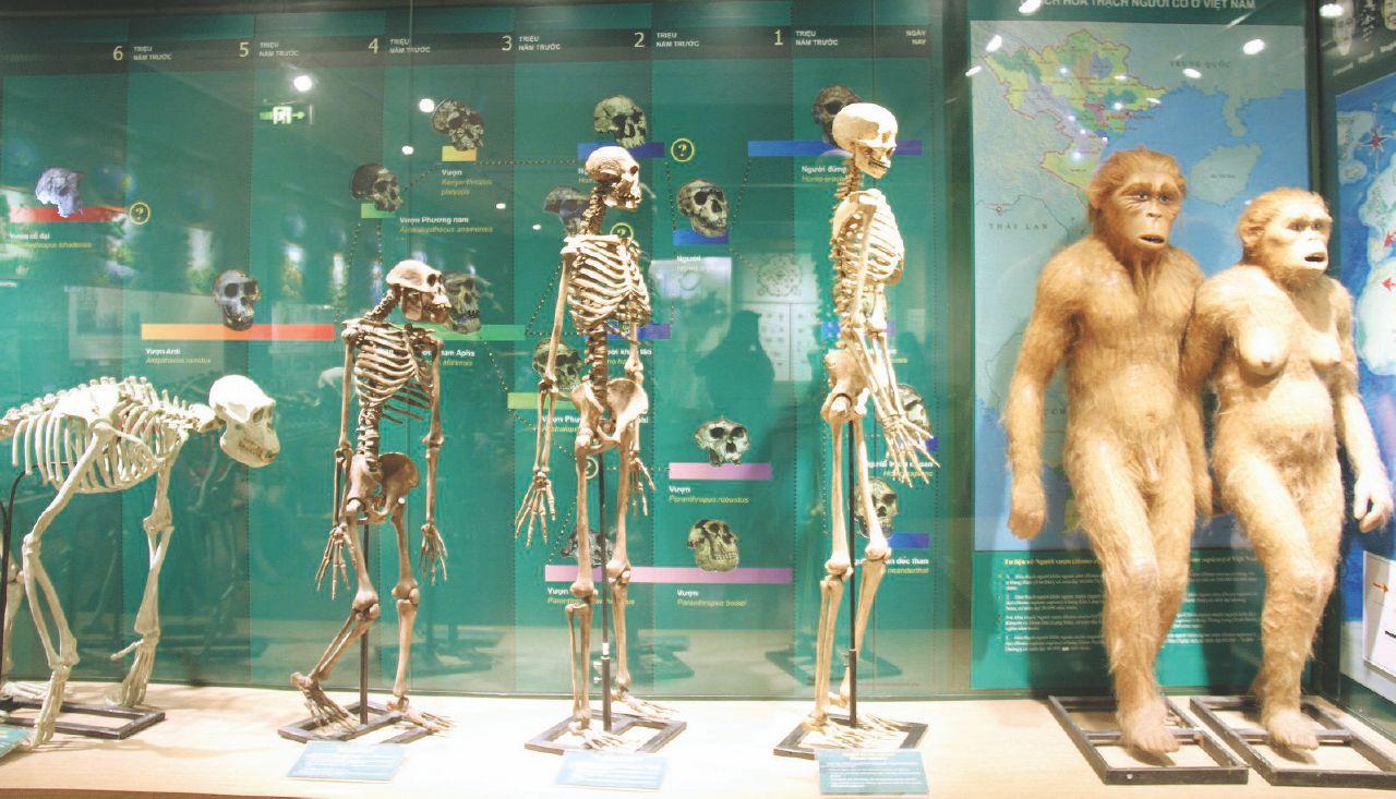 """Come siamo evoluti: da doppi """"sapiens"""" a tripli """"stupidus"""""""