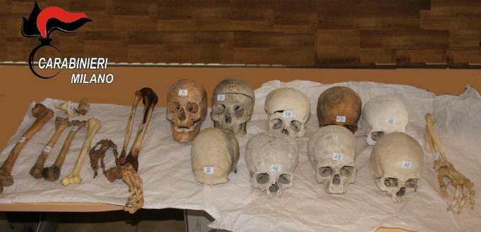 Milano, teschi e ossa umane in vendita su eBay: un cranio vale fino a 600 euro