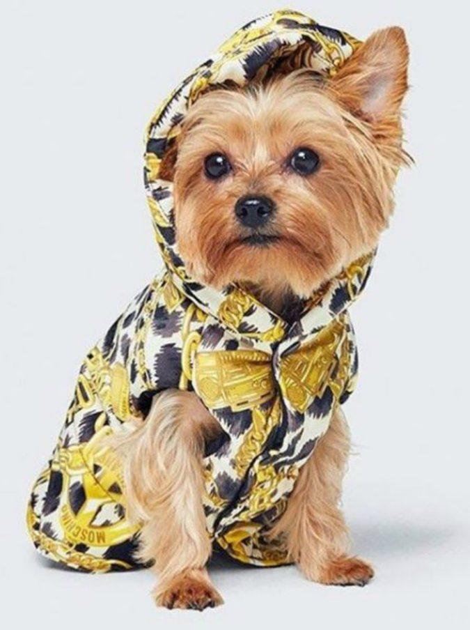 Moschino per H&M, arriva la collezione di cappottini per cani più stilosa di sempre