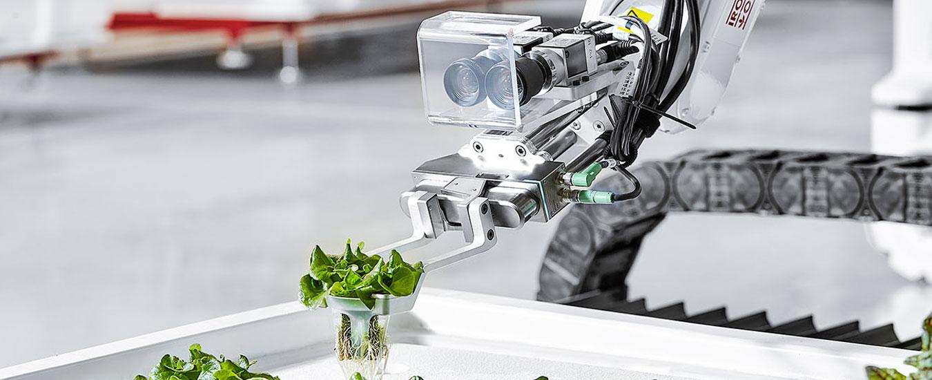 La fattoria robot che produce lattuga idroponica sotto casa, quasi tutto automatico