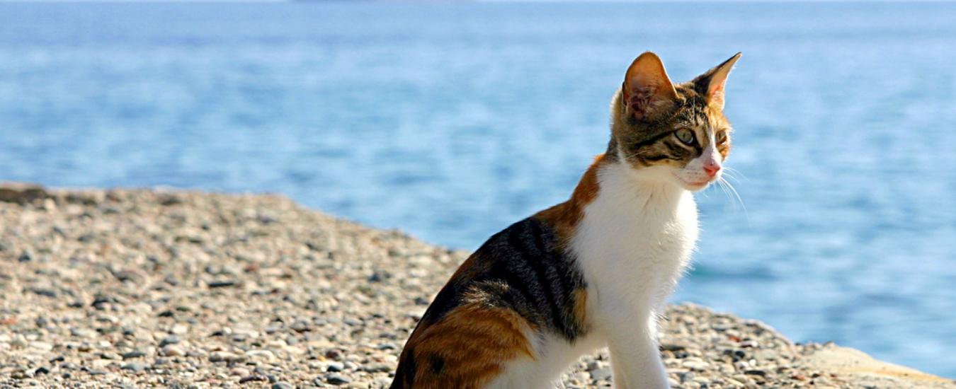 James Cook scoprì l'Australia grazie a un 'gatto'