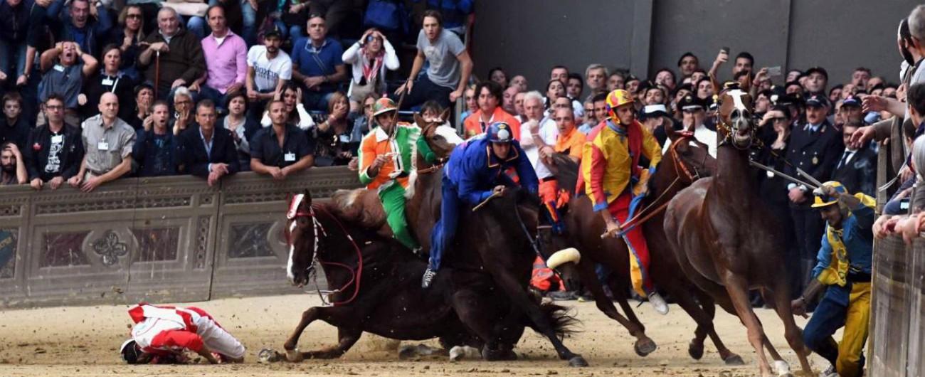 """Palio di Siena, morto il cavallo Raol. Animalisti: """"Decesso annunciato"""". E presentano denuncia in procura"""