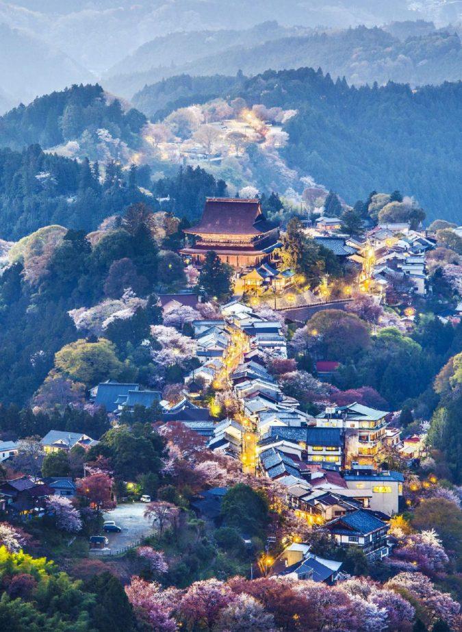 Gli alberi di Nara, in fiore al crepuscolo