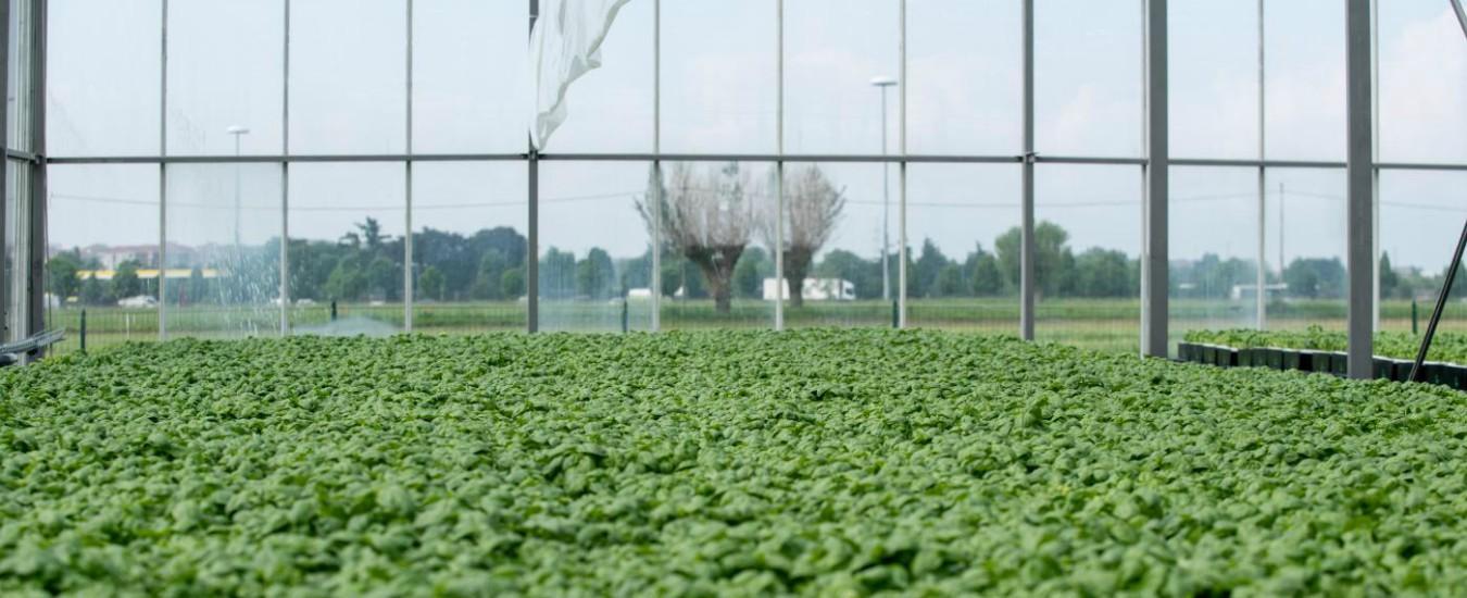 Decreto Genova, dopo gli idrocarburi anche la diossina nei fanghi sui terreni agricoli