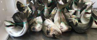 Allevamenti ittici, per i pesci l'inferno è nell'acqua