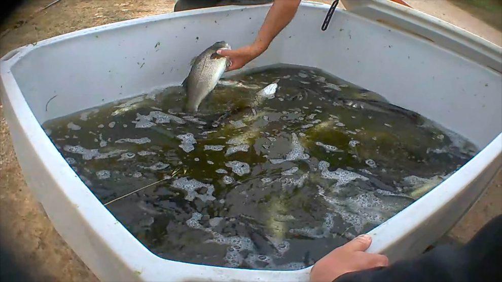 donna pesci che esce con un uomo di pesci