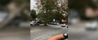 Roma, cade albero in mezzo alla strada mentre passa un'automobile: sfiorata tragedia. Il video
