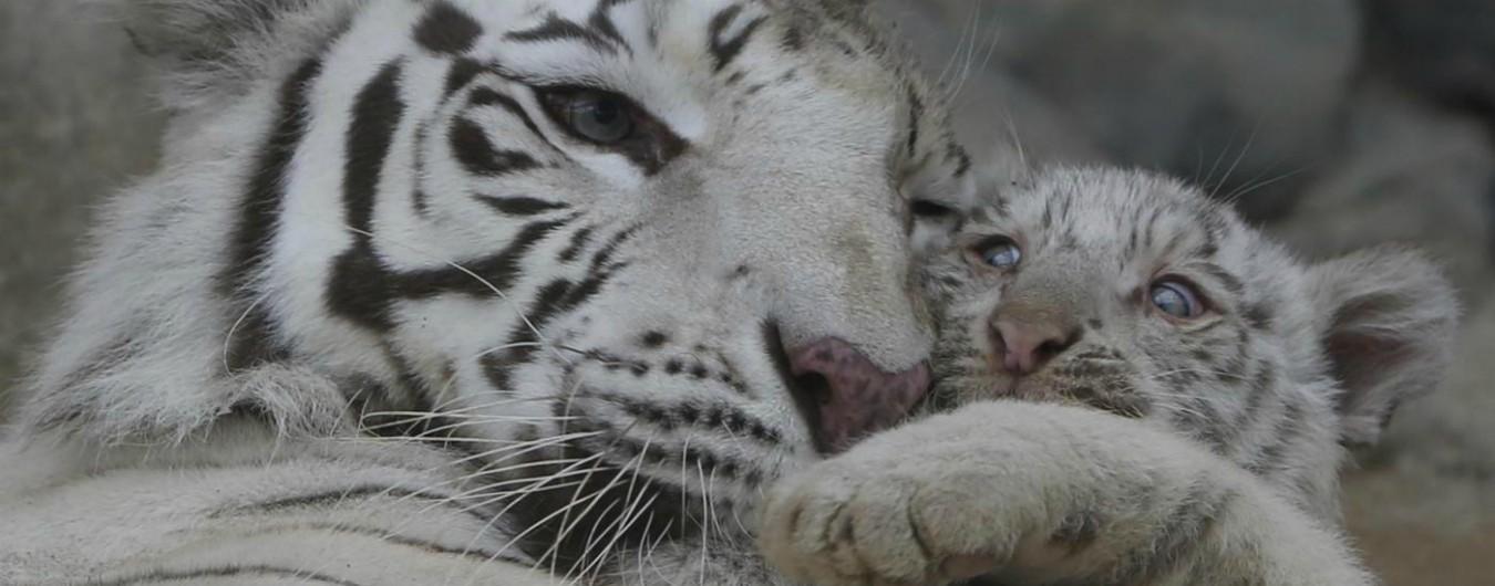 """Wwf, """"in 44 anni il 60% degli animali è stato spazzato via dall'azione umana"""""""