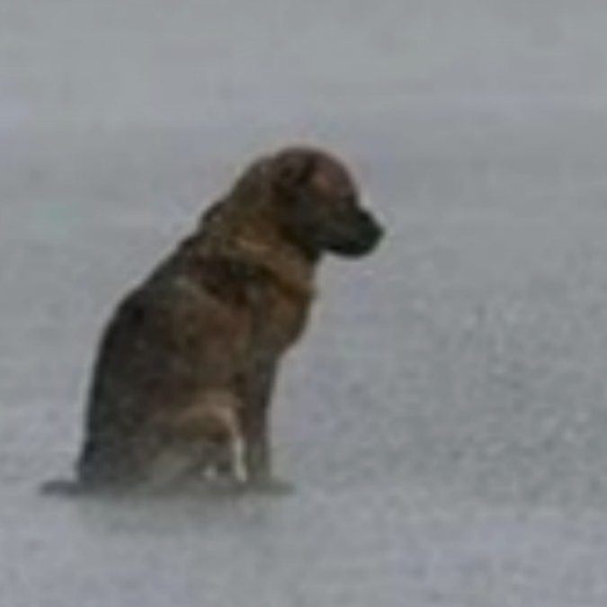 Cane cieco si perde nel traffico mentre piove a dirotto: la polizia lo trova impaurito a bagnato fradicio. Ma arriva il lieto fine