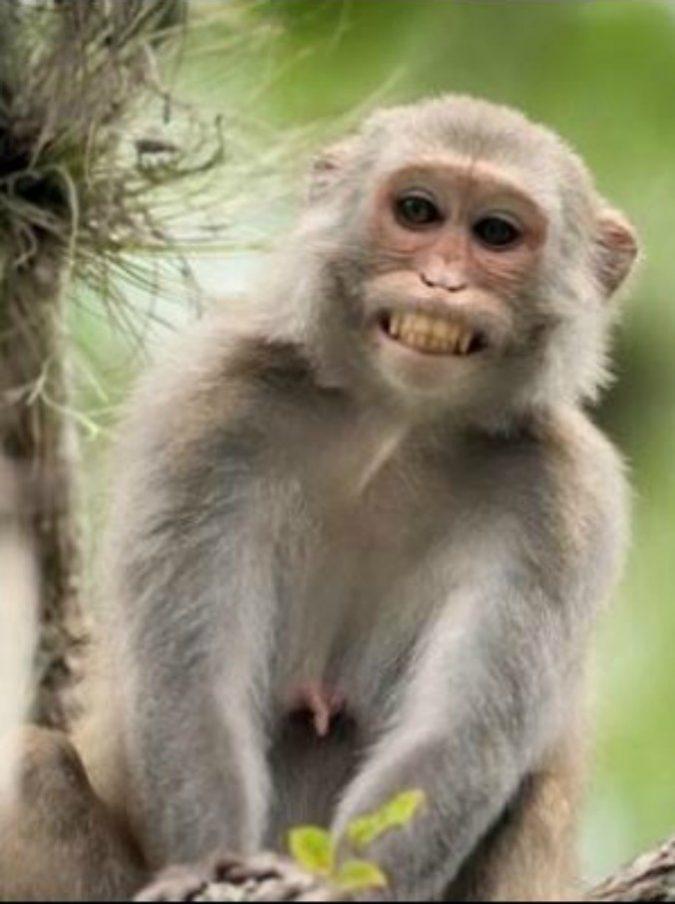 Scimmia strappa neonato dalle braccia della madre che lo sta allattando e lo uccide
