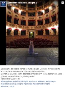 E' morto il gatto Gino, simbolo di San Giovanni in Persiceto, adorato da tutto il web