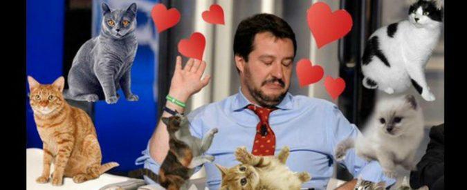 Salvini, dopo le sanzioni e il flop Btp arrivano i gattini (e i linciaggi)