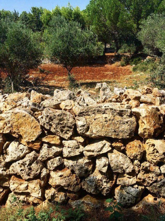 """Muretti a secco dichiarati patrimonio mondiale dell'Unesco: """"Perfetto esempio di armonia tra uomo e natura"""""""