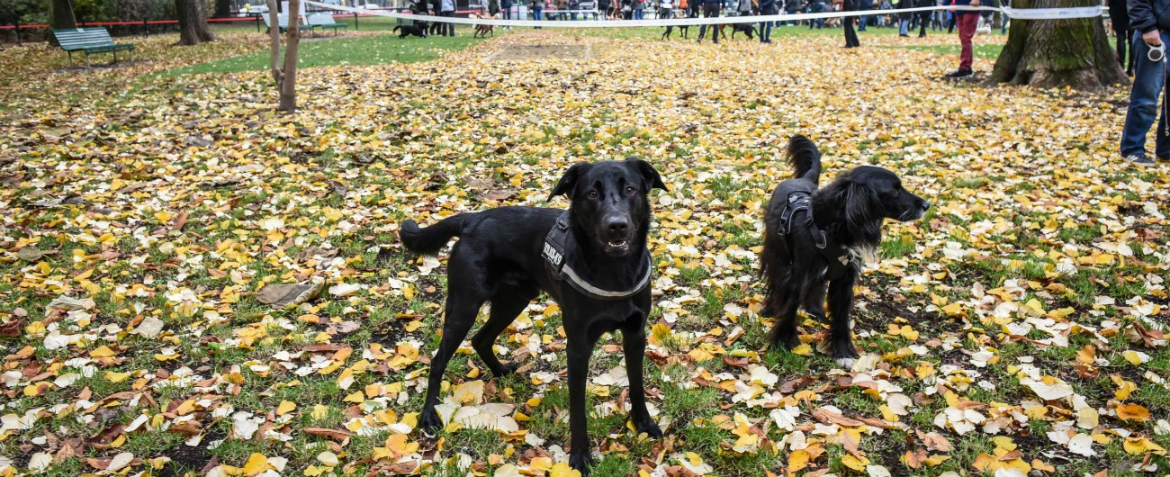 """Milano, cani al parco mangiano la droga nascosta dai pusher. Veterinari: """"Capita spesso"""". I padroni: """"Pochi controlli"""""""