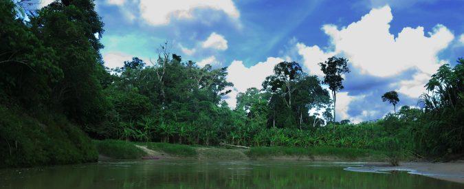 Brasile, la deforestazione dell'Amazzonia è solo l'inizio. Dobbiamo rispondere a Bolsonaro