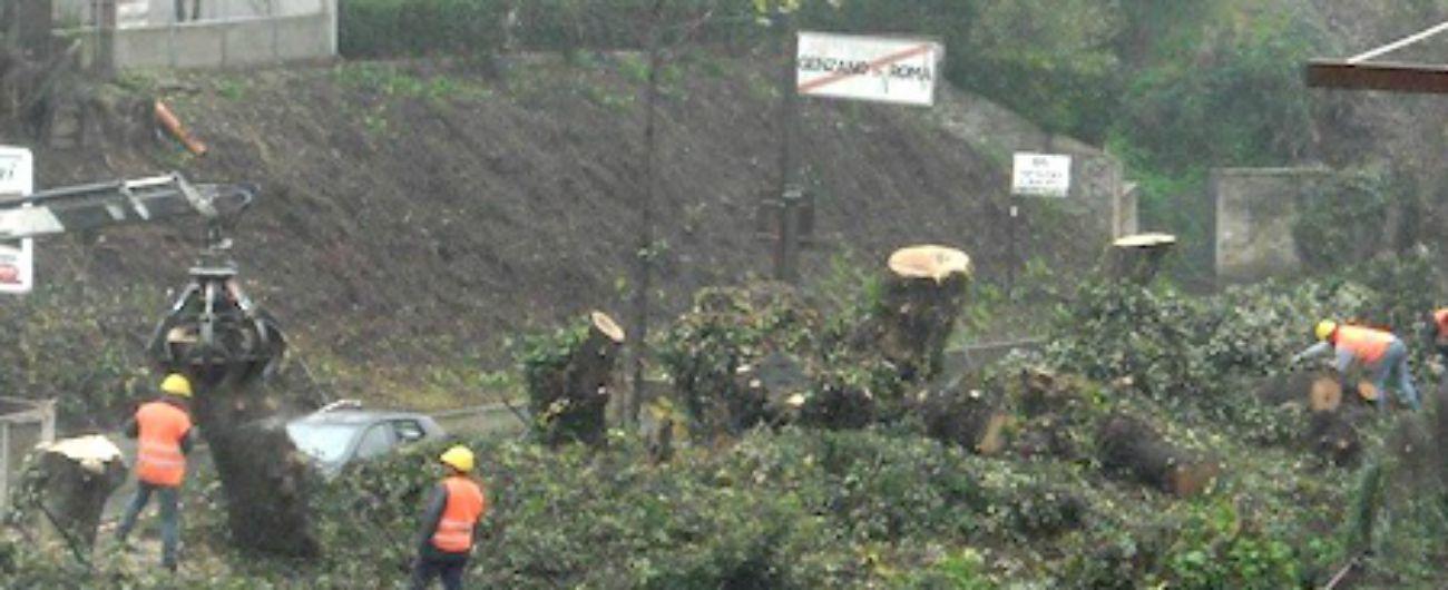 """Genzano, la """"guerra"""" degli alberi tagliati per motivi di sicurezza. L'assessore: """"Rinuncio a indennità per ripiantumare"""""""