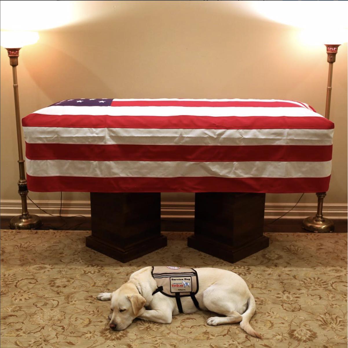 Sully, il cane di Bush padre, che veglia ancora il suo presidente