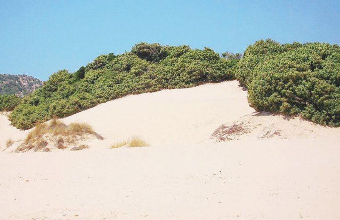 Il Davide di Sardegna batte il Golia d'Arabia. Gli ambientalisti comprano le dune di Chia