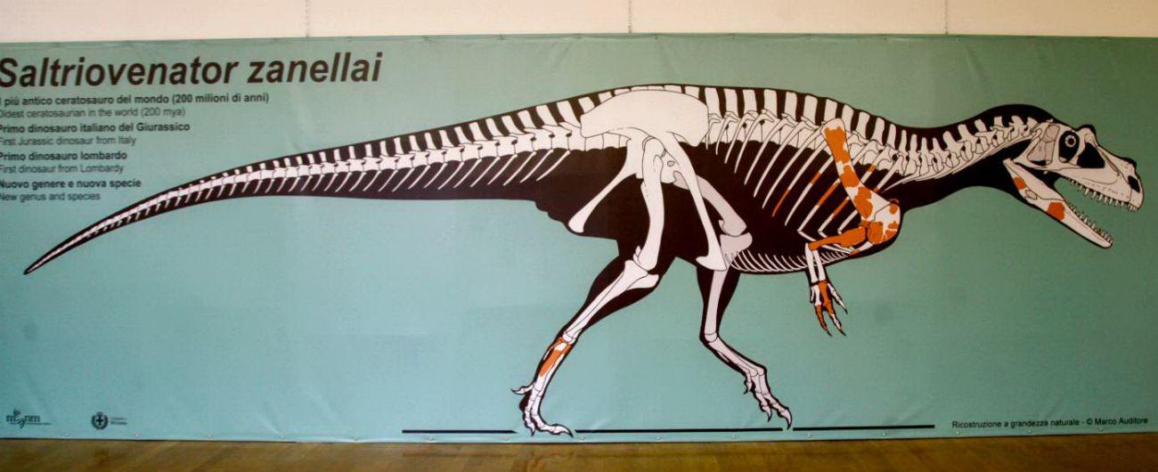 """""""Italiano il più antico dinosauro carnivoro di grandi dimensioni scoperto al mondo"""""""