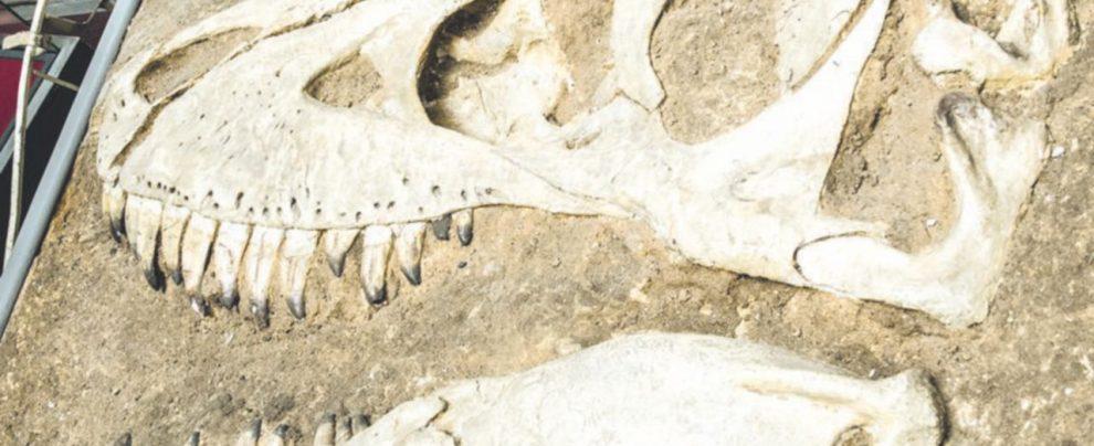 Predatori fregati dal tempo: sono radioattivi i fossili di dinosauro