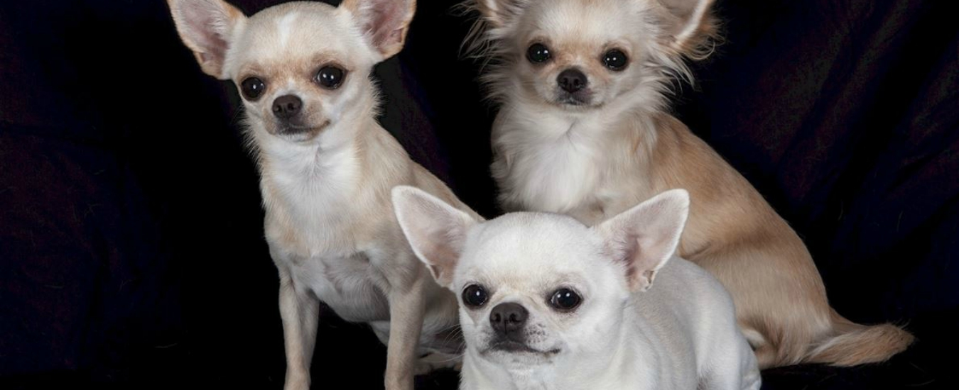 Cani, perché ce ne innamoriamo. E perché possiamo esserne gelosi