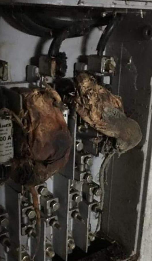 Scampia |  i ratti rosicchiano i cavi elettrici e la Vela resta al buio  Questo degrado non