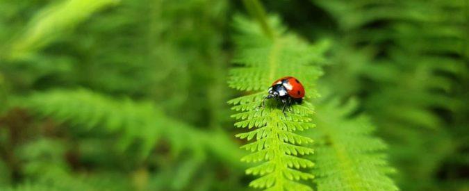 Clima, gli insetti stanno morendo. La fine del mondo è già iniziata