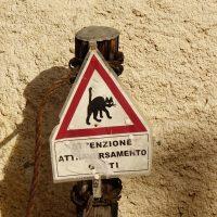 Attenzione ai gatti-Cibiana