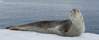 Pendrive USB perfettamente conservato e funzionante trovato nelle feci di una foca, com'è facile danneggiare l'ambiente!