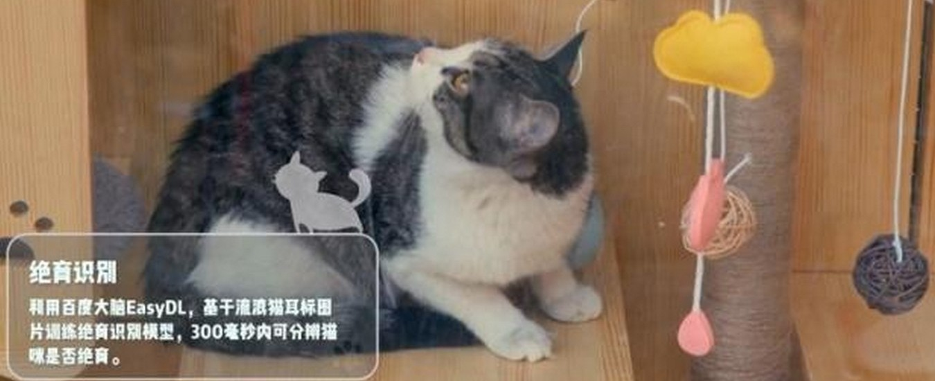 Rifugi automatizzati per gatti randagi, l'Intelligenza Artificiale li riconosce e segnala se sono malati