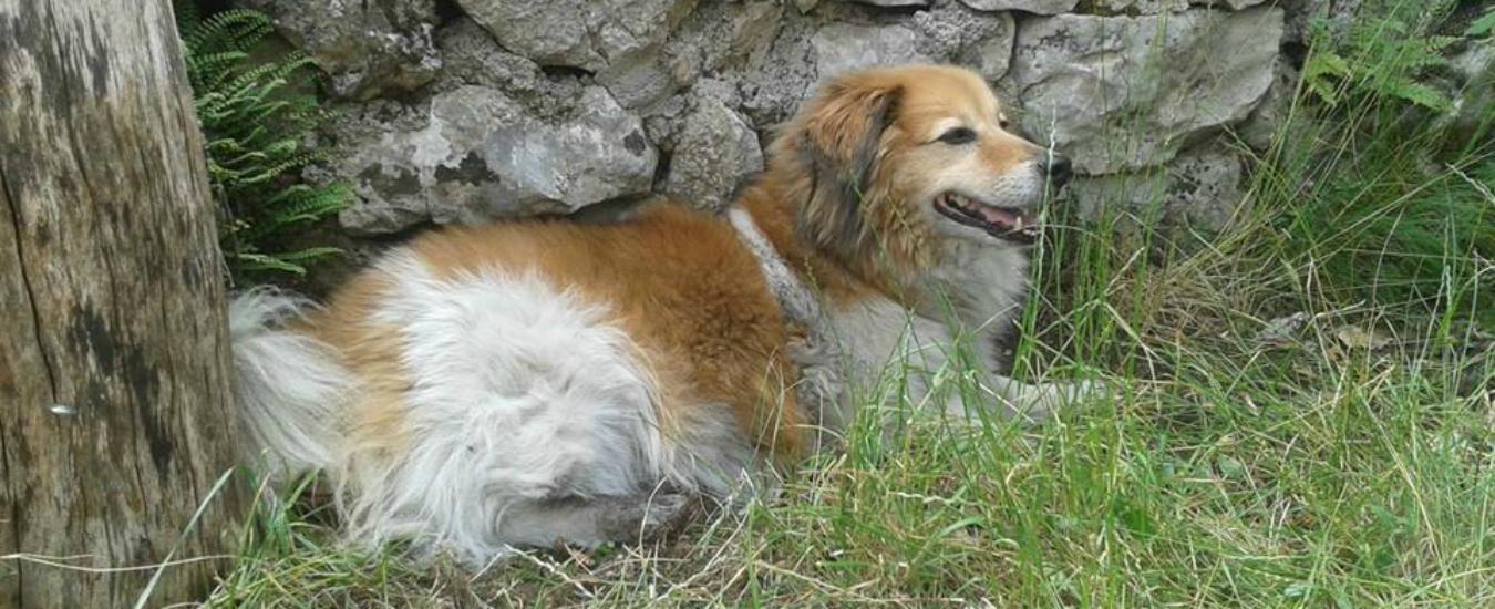 Cani: niente meticci, li vogliamo perfetti e di razza. Così però a rimetterci è la loro salute