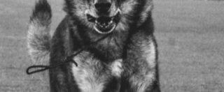 """Rigopiano, è morto Falco, il cane eroe che salvò tre bambini. Il ricordo del vigile del fuoco suo """"compagno: """"Ciao amico mio, grazie di tutto"""""""