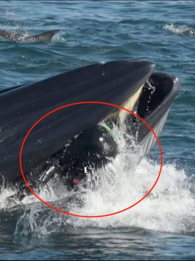 """Sub ingoiato da una gigantesca balena, viene """"risputato"""" fuori illeso"""