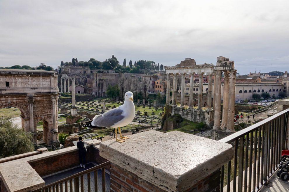 Il Foro romano con visitatore