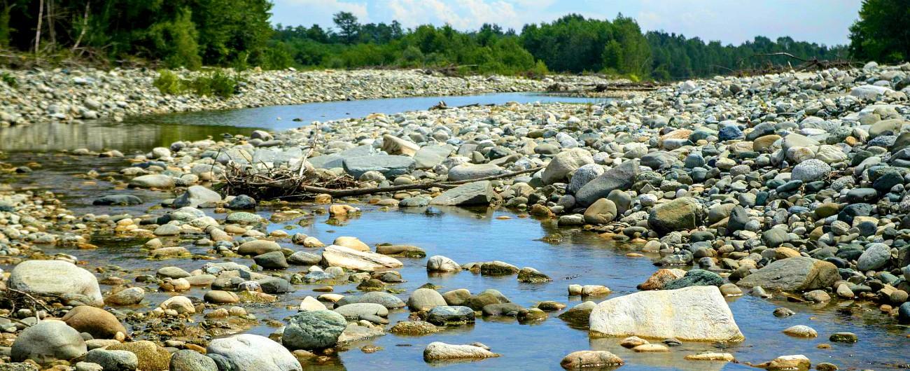 Cambiamenti climatici, l'inverno caldo del Nord mette già in crisi il Po. E nel Delta risale l'acqua del mare: habitat a rischio