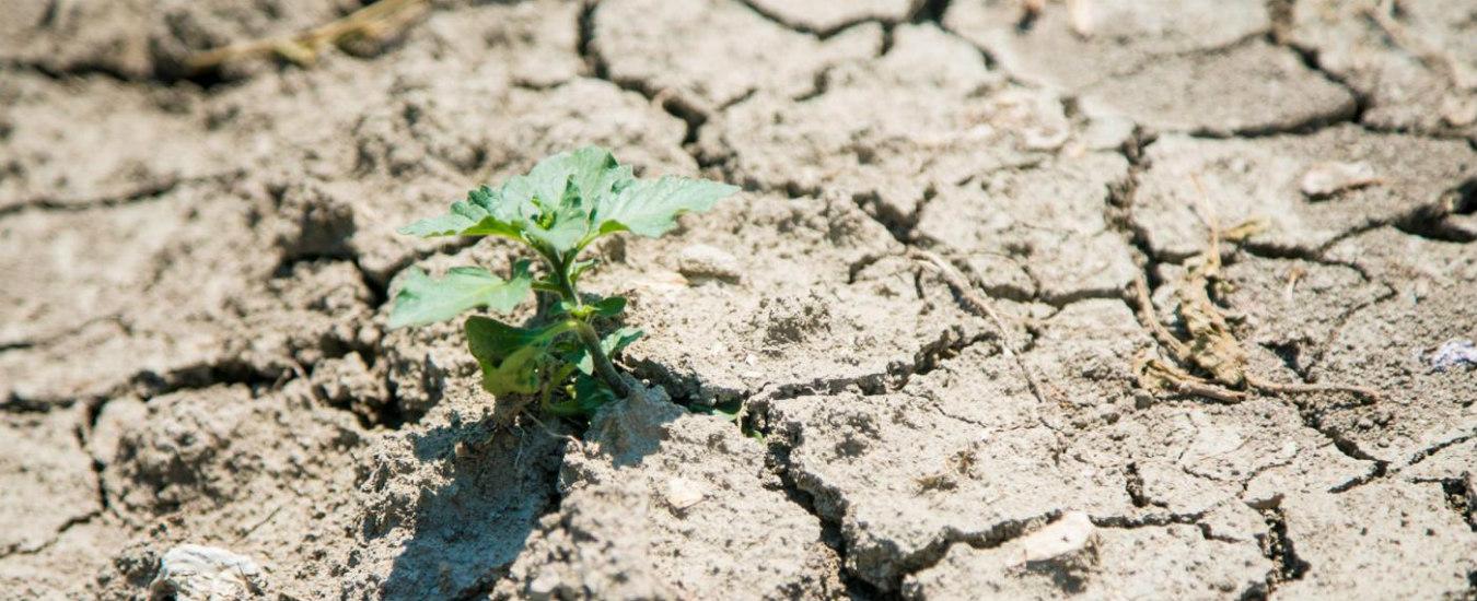 Clima, in Italia la siccità è spaventosa. Ma si continua a far finta di niente