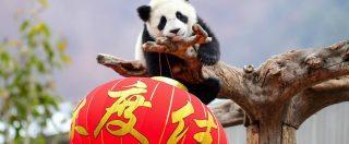 """Nuova Via della Seta, la Cassa depositi e prestiti lancerà """"Panda bond"""" per finanziare aziende italiane in Cina"""