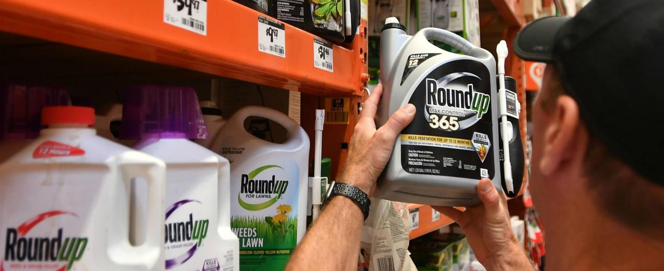 """Glifosato, Monsanto condannata: """"Il loro diserbante causa del cancro"""". 80 milioni di risarcimento a un californiano"""