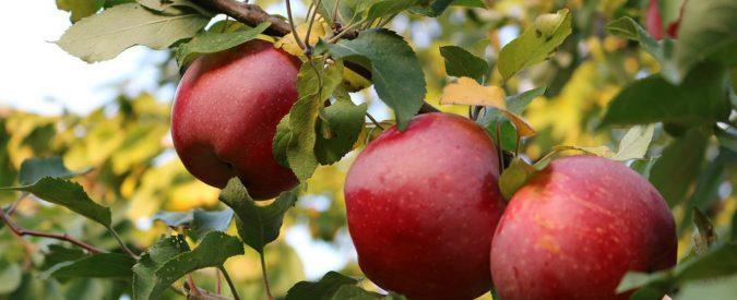 Pesticidi sulle bucce di mela? La verità è che la normativa ha un grave buco nero