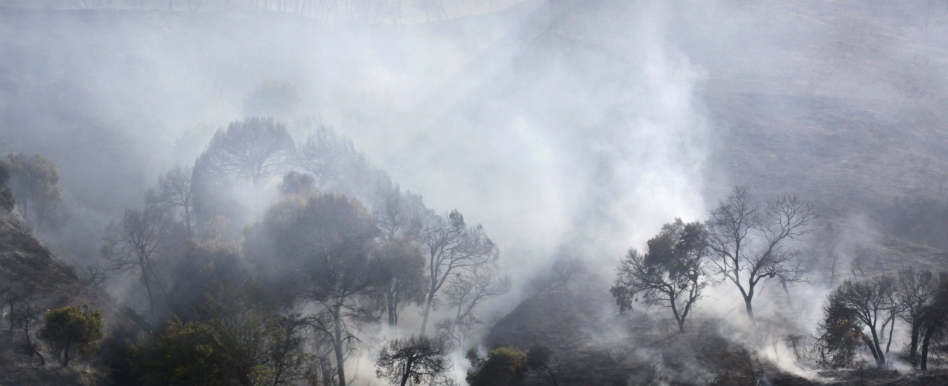 Quattro mezze cartelle /26: Incendio nel bosco